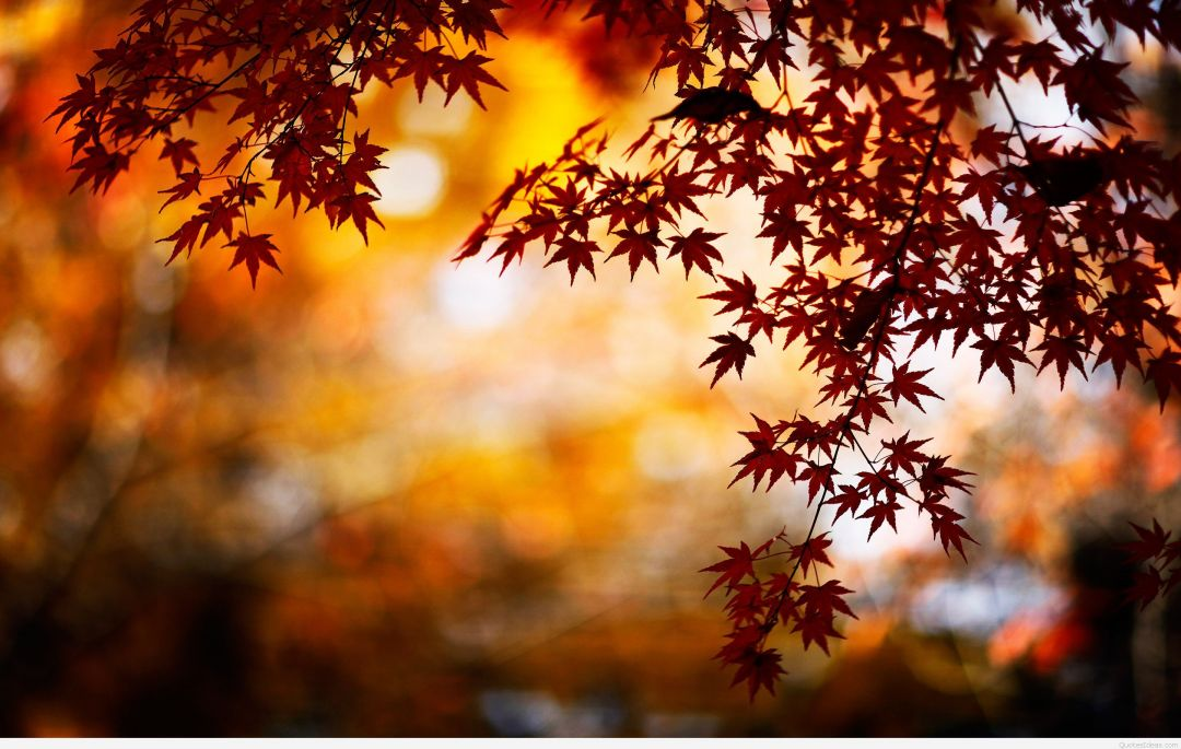 Hello Autumn Aesthetic HD Wallpapers (Desktop Background / Android / iPhone) (1080p, 4k) (38721) - 3D / Abstract