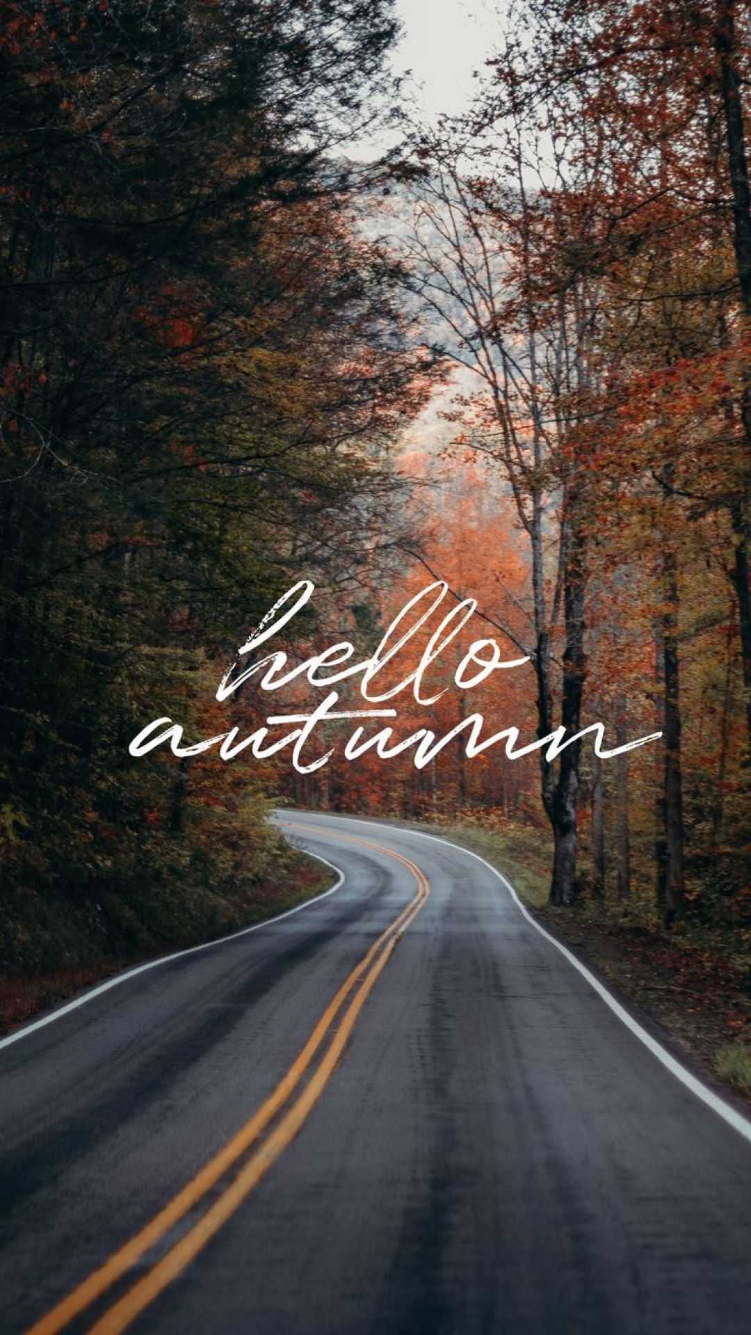 Hello Autumn Aesthetic HD Wallpapers (Desktop Background / Android / iPhone) (1080p, 4k) (38739) - 3D / Abstract