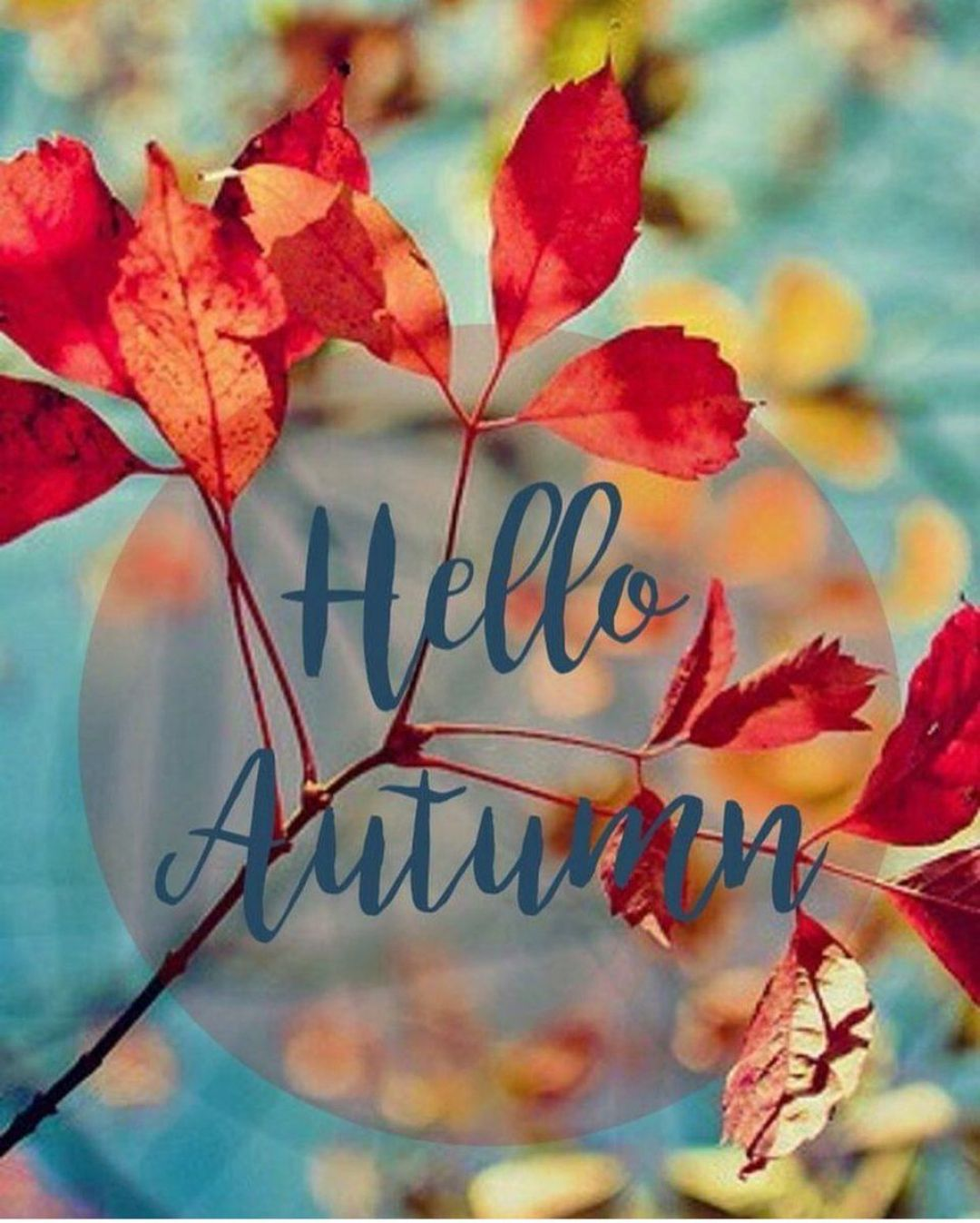 Hello Autumn Aesthetic HD Wallpapers (Desktop Background / Android / iPhone) (1080p, 4k) (38771) - 3D / Abstract