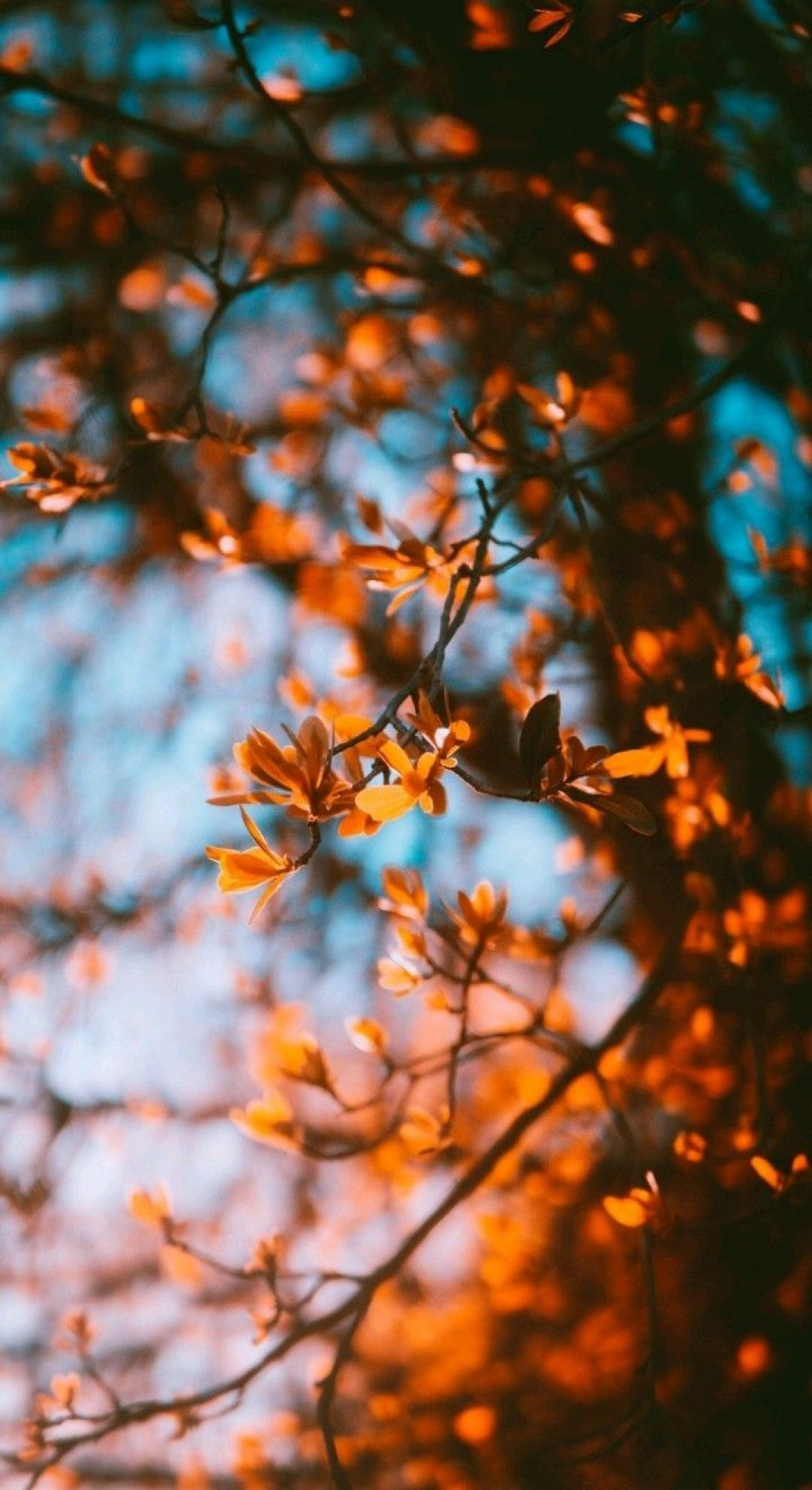 55 Hello Autumn Aesthetic Hd Wallpapers Desktop Background Android Iphone 1080p 4k 1080x1980 2020