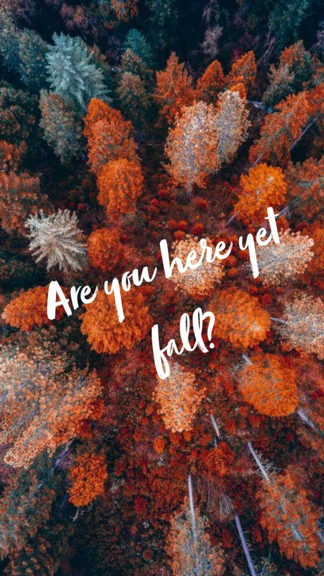 Hello Autumn Aesthetic HD Wallpapers (Desktop Background / Android / iPhone) (1080p, 4k) (38766) - 3D / Abstract