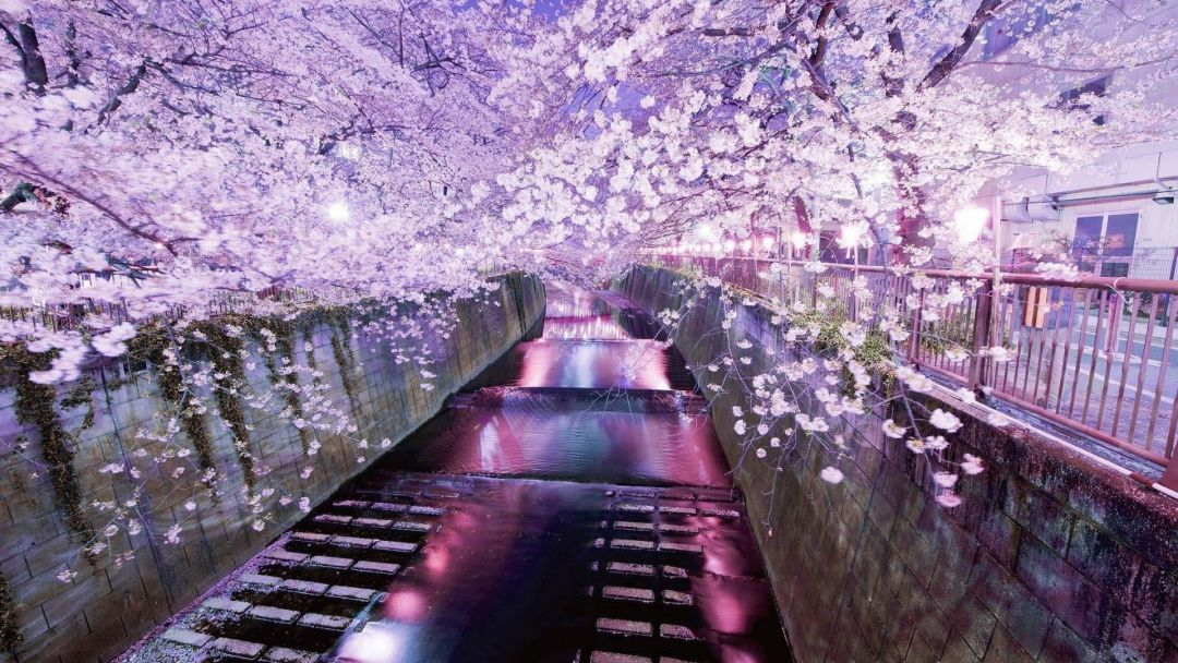 25 Japanese Aesthetic Hd Wallpapers Desktop Background Android Iphone 1080p 4k 1920x1080 2020