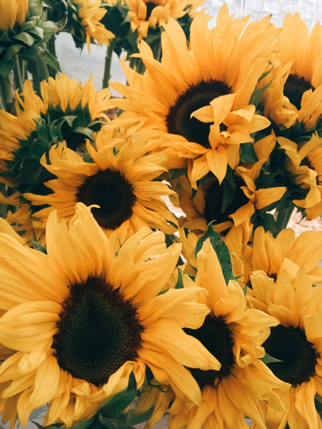 50 Yellow Aesthetic Sunflowers Hd Wallpapers Desktop Background Android Iphone 1080p 4k 3024x4032 2020