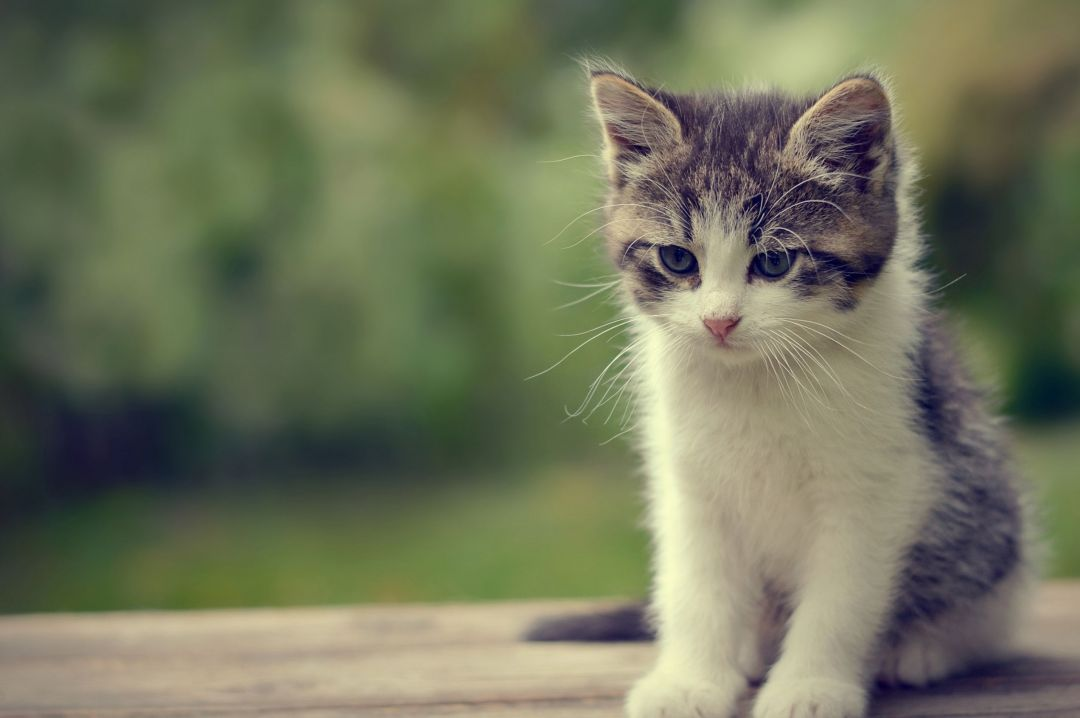 40 Cute Cat Hd Wallpapers Desktop Background Android Iphone 1080p 4k 2545x1692 2020