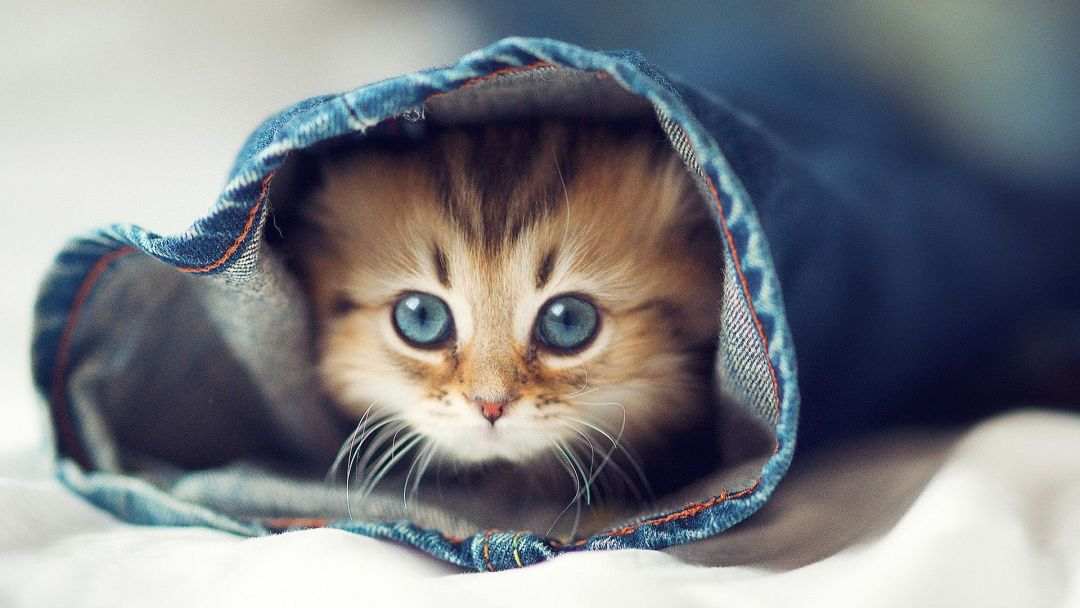 View Cute Iphone Wallpapers Hd Pics
