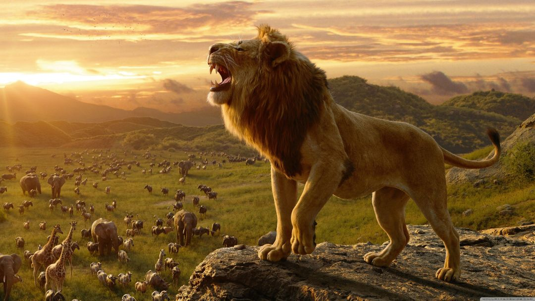 20 Lion King 4k Hd Wallpapers Desktop Background Android Iphone 1080p 4k 3840x2160 2020