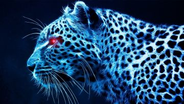 Cheetah HD Wallpapers (Desktop Background / Android / iPhone) (1080p, 4k)