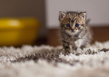 Cute Cat HD Wallpapers (Desktop Background / Android / iPhone) (1080p, 4k)