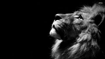 Epic Lion HD Wallpapers (Desktop Background / Android / iPhone) (1080p, 4k)