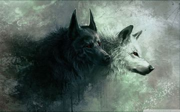 Wolf HD Wallpapers (Desktop Background / Android / iPhone) (1080p, 4k)